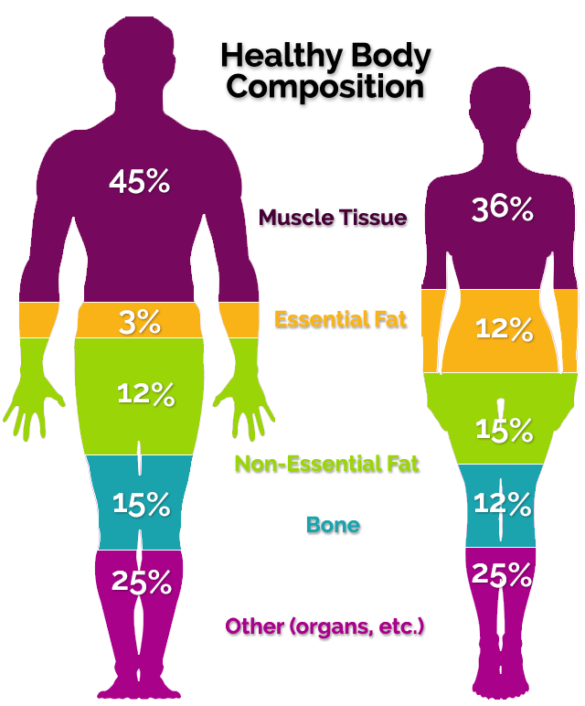 body-composition.png